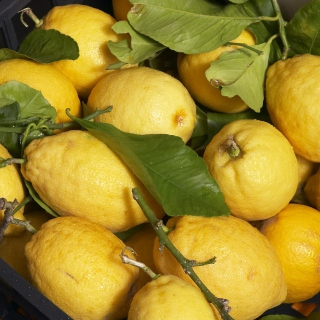 Fresh Lemons - Obrázkek zdarma pro iPad Air