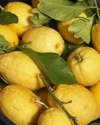 Fresh Lemons - Obrázkek zdarma pro 240x400