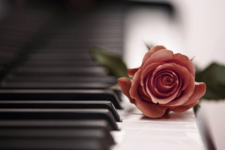 Beautiful Rose On Piano Keyboard - Obrázkek zdarma pro 1024x600