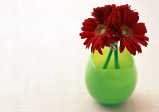 Gerbera In Vase Background for Android, iPhone and iPad
