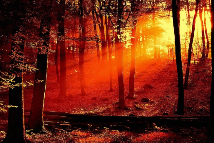 Sun Shining Drawing Sun Shining Through Trees