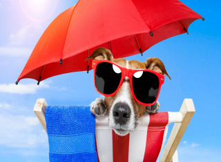 Funny Summer Dog Wallpaper for Android, iPhone and iPad