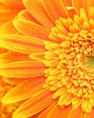 Amazing Orange Gerbera - Obrázkek zdarma pro 360x480