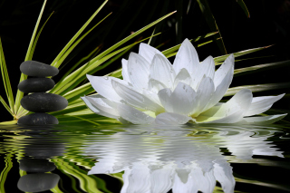 Lotus and Spa Stones Wallpaper for Android, iPhone and iPad