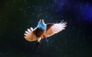 Картинка Bird Flying Under Rain для телефона