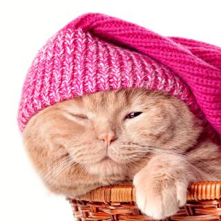 Kitten in Basket - Obrázkek zdarma pro 208x208