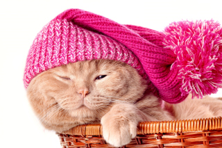 Kitten in Basket Picture for Android, iPhone and iPad