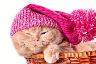 Kitten in Basket - Obrázkek zdarma pro 1366x768
