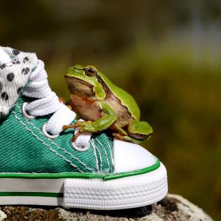 Green Frog Sneakers - Obrázkek zdarma pro 208x208