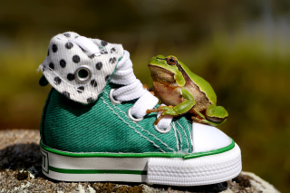 Green Frog Sneakers - Obrázkek zdarma pro Android 1920x1408