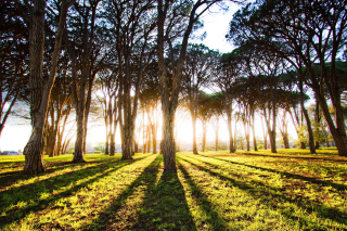 Free Long Trees Shadows Picture for Android, iPhone and iPad