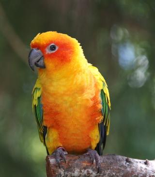 Golden Parrot - Obrázkek zdarma pro Nokia C1-01