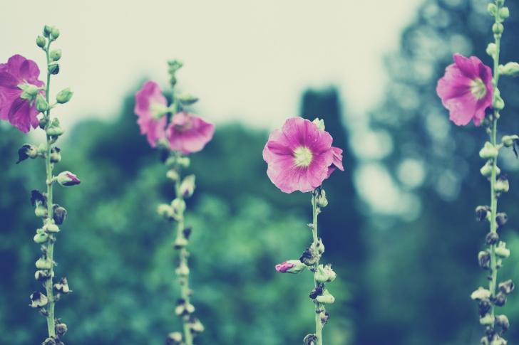 Vintage-Pink-Flowers-wide-i.jpg