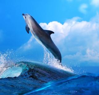 Dolphin - Obrázkek zdarma pro 208x208