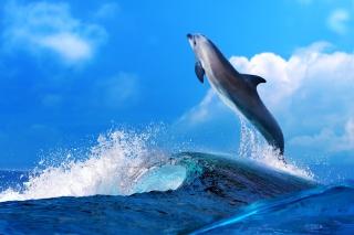 Dolphin - Obrázkek zdarma pro HTC Desire HD