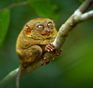 Little Lemurian - Obrázkek zdarma pro iPad