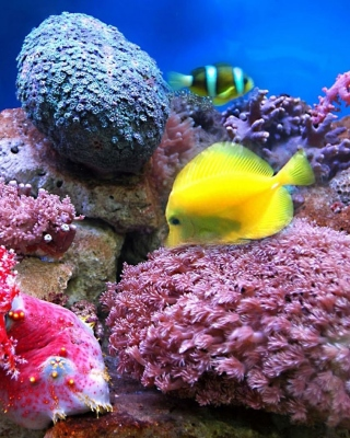 Colorful marine fishes in aquarium - Obrázkek zdarma pro iPhone 5C
