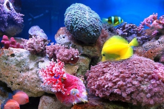 Colorful marine fishes in aquarium papel de parede para celular