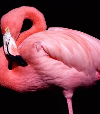 Pink Flamingo Posing - Obrázkek zdarma pro Nokia 206 Asha