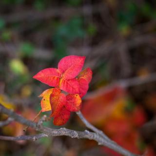 Macro Autumn Leaf - Obrázkek zdarma pro iPad 3