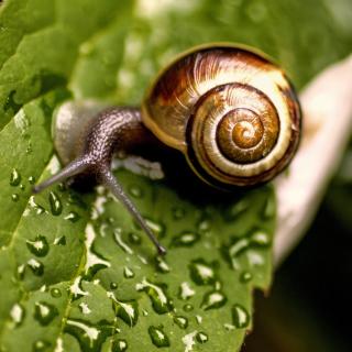 Snail and Drops - Obrázkek zdarma pro iPad