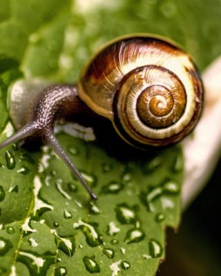 Snail and Drops - Obrázkek zdarma pro Nokia X6