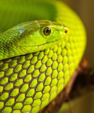 Green Snake Macro - Obrázkek zdarma pro Nokia C2-01