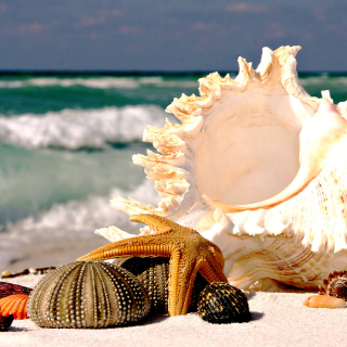 Seashells - Obrázkek zdarma pro iPad mini