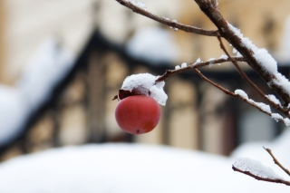 Apple And First Snow Background for Android, iPhone and iPad