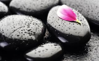 Stones And Petal - Obrázkek zdarma pro 720x320