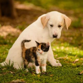 Puppy and Kitten - Obrázkek zdarma pro 1024x1024