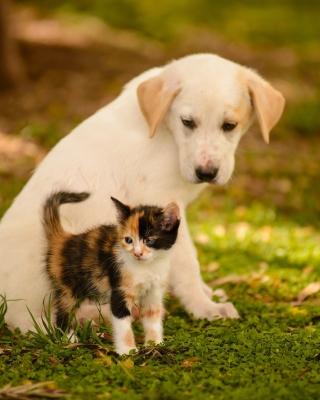 Puppy and Kitten - Obrázkek zdarma pro 128x160