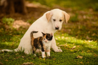 Puppy and Kitten - Obrázkek zdarma pro Widescreen Desktop PC 1920x1080 Full HD