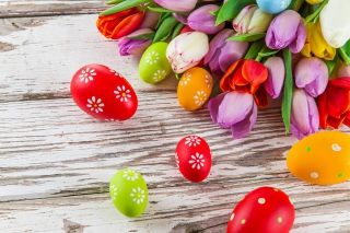 Easter Tulips and Colorful Eggs - Obrázkek zdarma pro LG P500 Optimus One