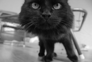 Black Curious Kitten Background for Android, iPhone and iPad
