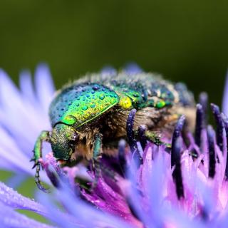 Macro Blur Photo with Bug - Obrázkek zdarma pro 1024x1024