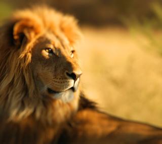 King Lion - Obrázkek zdarma pro iPad Air