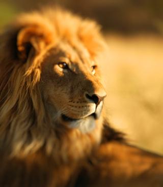 King Lion - Obrázkek zdarma pro Nokia Asha 310