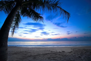 Tropical Sunset Picture for Android, iPhone and iPad