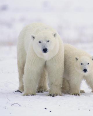 Polar Bears in Canada - Obrázkek zdarma pro iPhone 5C