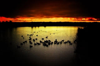 Free Ducks On Lake At Sunset Picture for Android, iPhone and iPad