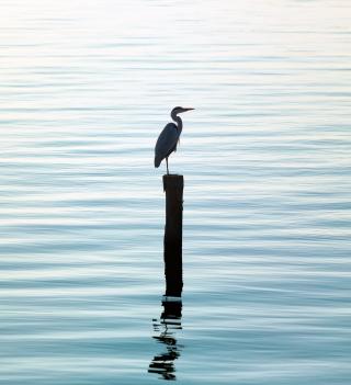 Lonely Bird - Obrázkek zdarma pro iPad mini