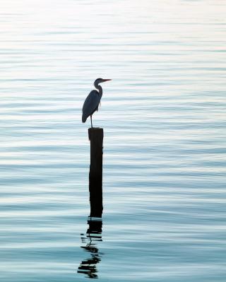 Lonely Bird - Obrázkek zdarma pro Nokia Asha 501