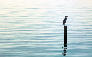 Lonely Bird - Obrázkek zdarma pro 1440x900