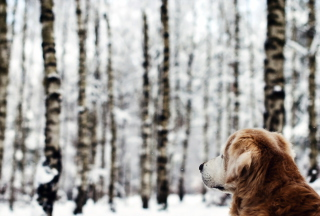 Dog Looking At Winter Landscape Picture for Android, iPhone and iPad