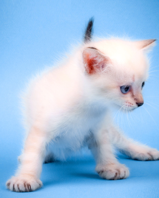 Small Kitten - Obrázkek zdarma pro Nokia C6