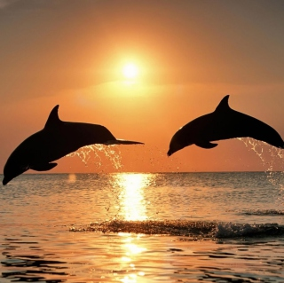 Dolphins At Sunset - Obrázkek zdarma pro 128x128