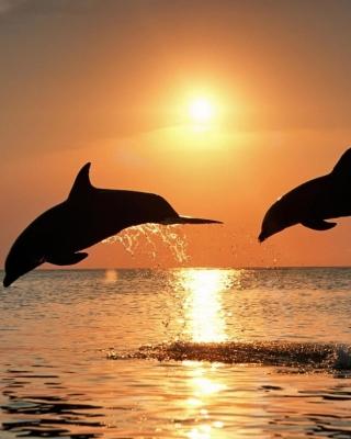 Dolphins At Sunset - Obrázkek zdarma pro Nokia Asha 305