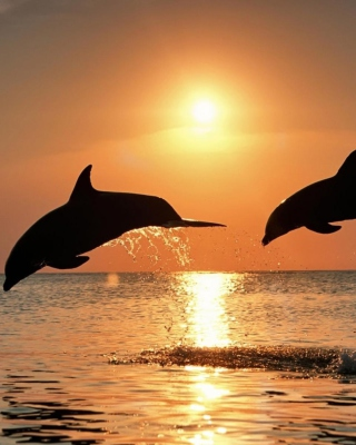Dolphins At Sunset - Obrázkek zdarma pro 360x640