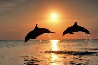 Dolphins At Sunset - Obrázkek zdarma pro Fullscreen Desktop 800x600